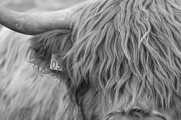 Schotse hooglander van Silvia Rikmanspoel