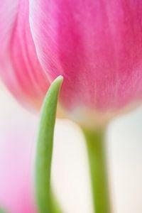 Tulp collectie voorbeeld