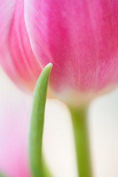 Roze tulp van Judith Borremans
