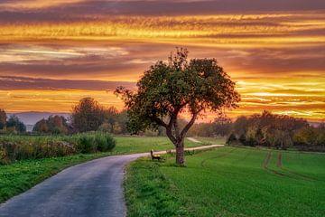 Apfelbaum neben einem Pfad bei Sonnenuntergang von Katho Menden