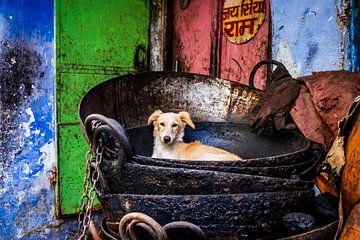 Hund in Indien von Caroline Boogaard