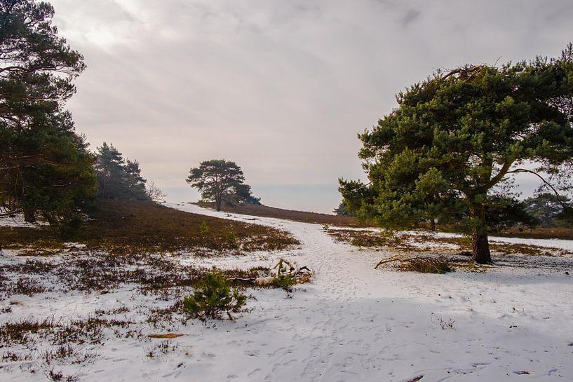 verlaten pad in de natuur van Heleen Pennings