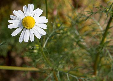 De bloem van Ronald De Neve
