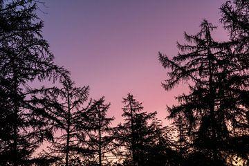 silhouet van bomen met zonsopkomst. van Enrique De Corral