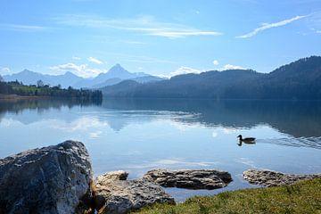 bergsee weissensee im morgenlicht vor den bayerischen alpen bei füssen im allgäu, süddeutschland, ko von Maren Winter