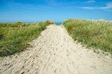 Dunes Zealand von Jessica Berendsen