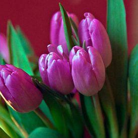 Pink Tulip Poetry van Silva Wischeropp
