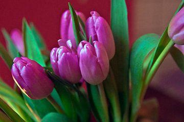 Pink Tulip Poetry von Silva Wischeropp