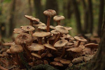 paddenstoelen in de herfst von nikita van der Starre- Zagers