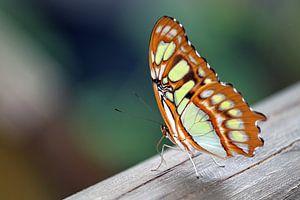 Vlinder op een stuk hout 3