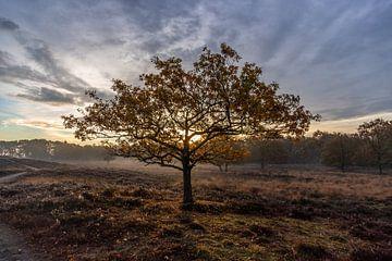Eenzame boom van Frans Plat