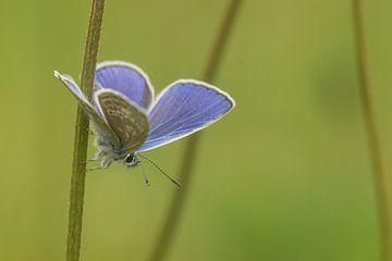 Papillon en vert sur Miranda Rijnen Fotografie