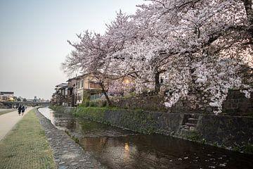 Bloesem in Kioto van Armin Palavra