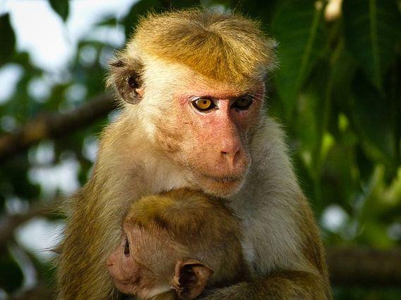 Makaak met baby van Inez Wijker