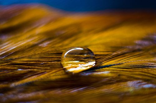 The simpicity of a drop van Ricardo Bouman | Fotografie