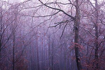 Wald im Nebel von Tobias Luxberg