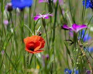 Feldblumenstrauß mit Mohn. von Henk Van Nunen Fotografie