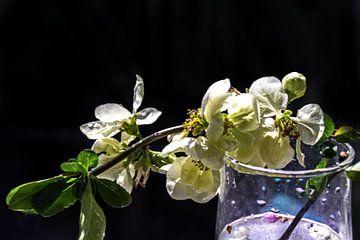 Kweepeer bloesem in een glas water van Christine Nöhmeier