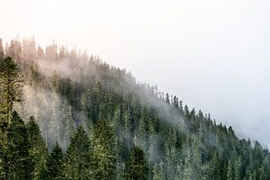 Zon in de mist tussen de bomen van Rauwworks