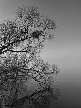 Nebel von Ralf Wagner