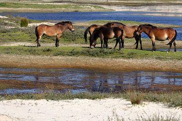 Wilde Paarden op Terschelling von Rijk van de Kaa