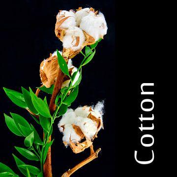 Cotton van Leopold Brix