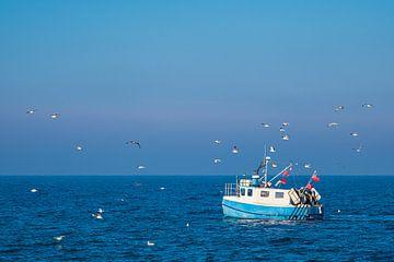 Fischerboot mit Möwen auf der Ostsee vor Warnemünde von Rico Ködder