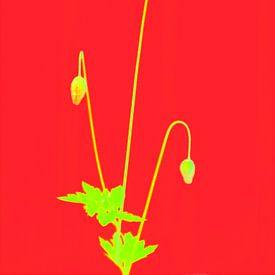 Primäre farbige Mohnblume von Pieter van Roijen