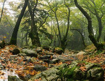 Sprookjes  bos van Bep van Pelt- Verkuil