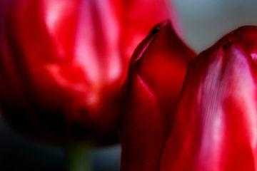 Het stalken van een tulp - een familieportret #17 van Peter Baak