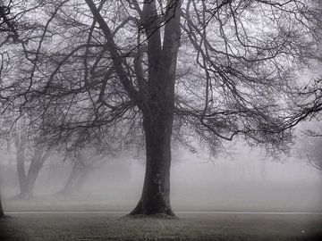 Nebel 05 von Ilona Picha-Höberth