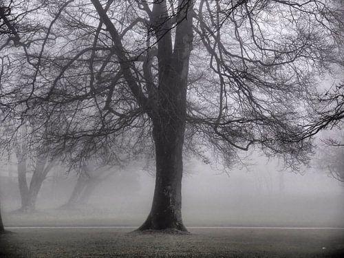 Nebel 05 von