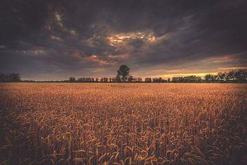 Horizon achter het veld van Skyze Photography by André Stein