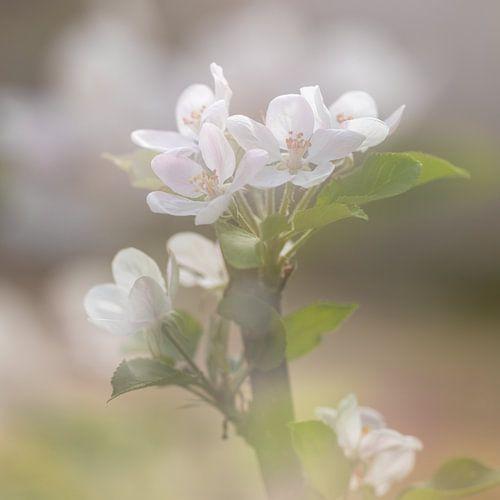 Voorjaarsboeket met appel bloesem