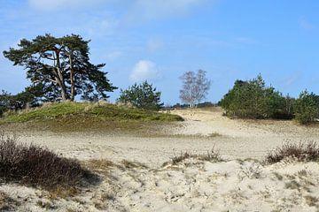 Natuur op een zandverstuiving(2) van Gerard de Zwaan