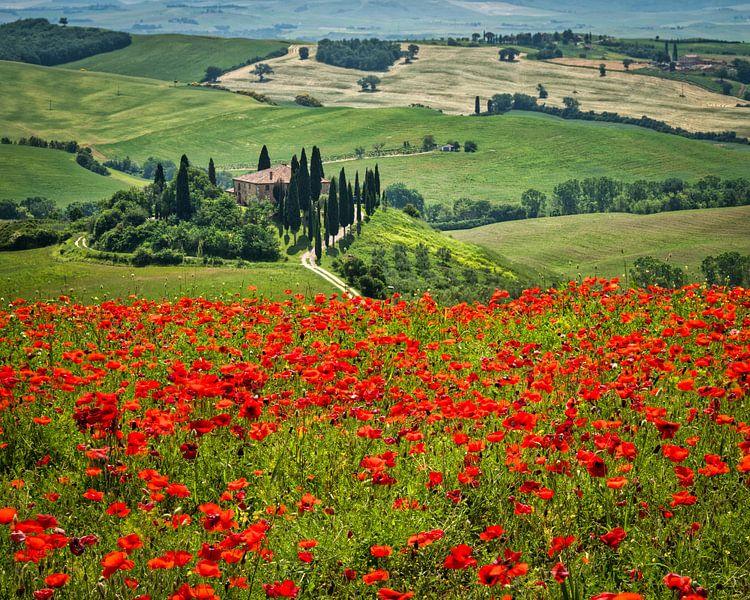 Podere Belvedere in een bloeiend klaprozenveld I van Teun Ruijters