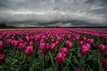 Plankwolk boven een tulpenveld van Ruud van der Lubben