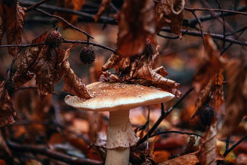 Der Herbst in seiner schönsten Form von Maarten Borsje