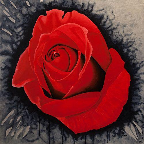 spetterende rode roos van