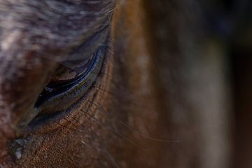 Traurigkeit im Auge des Pferdes von J..M de Jong-Jansen