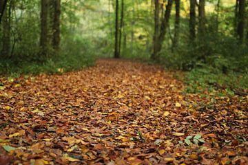 Herfst in het bos van Marcel Alsemgeest