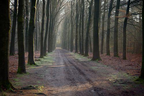 Waldweg im Herbst von