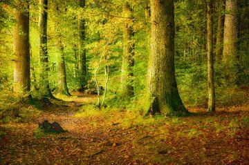 Forest in sunlight van Nicc Koch