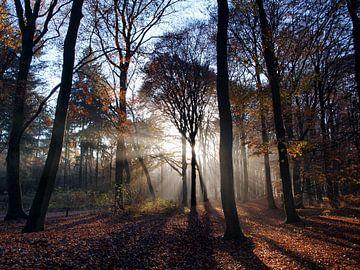 Zonnestralen door het bos (Ede, Nederland) van Ben Nijenhuis