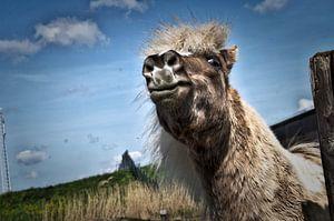Das glückliche Pferd