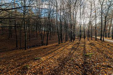 Lange schaduwen in het bos van