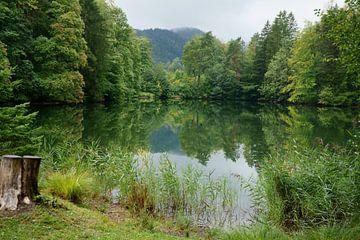 Bosmeer in de herfst van ViLa