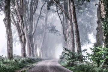 Mystische Straße von Niels Barto