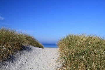 Die Dünen an der Ostsee von Karina Baumgart