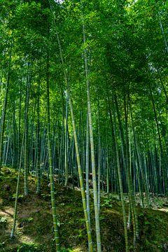 Bamboe bos in Kyoto van Mickéle Godderis